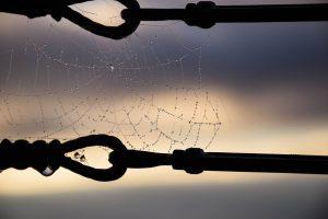 Angst-for-edderkopper